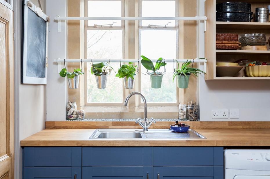 Зеленые растения на кухне